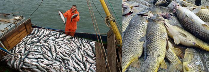 Рыба в помышленности Норвегии и вакансии