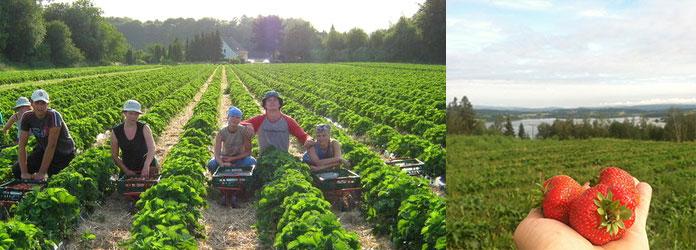 Фермерская работа по сезону в Норвегии